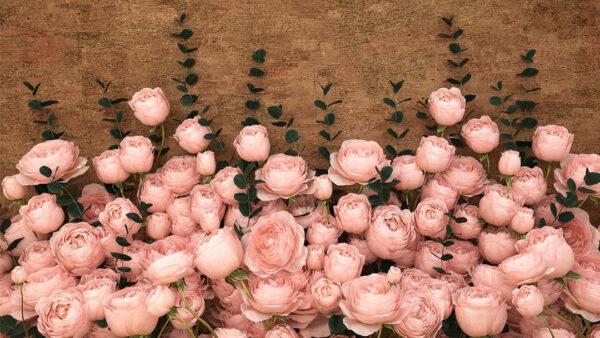 Fototapety 3D Rosa Inglesa Sapphirine jasnobrązowe tło | fototapeta kwiaty