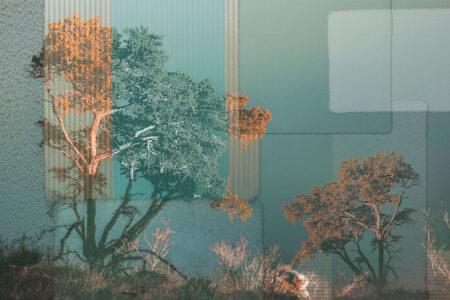 Fototapety Calmness Gold zielone odcienie | fototapeta las