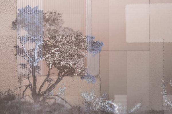 Fototapety Calmness Gold różowe odcienie | Fototapeta Las