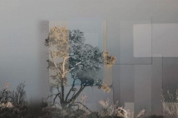 Fototapety Calmness Gray szary przykład | Fototapeta Las