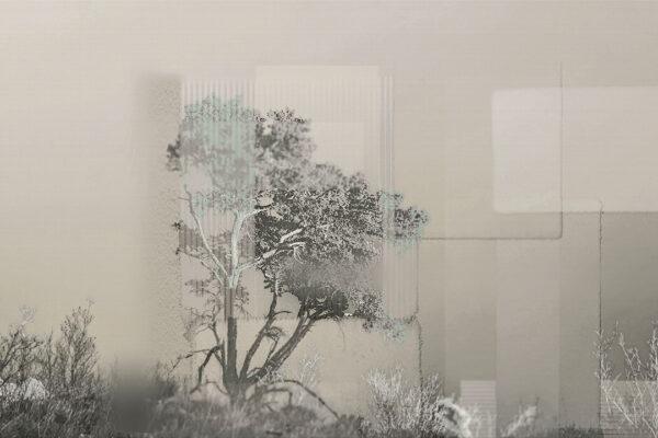 Fototapety Calmness Gray zielone odcienie | fototapeta las