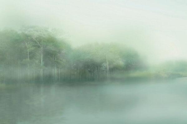 Fototapety Foggy Forest zielone odcienie | tapeta las we mgle