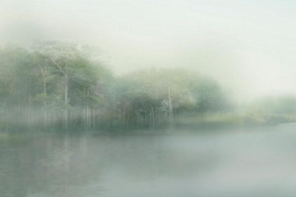 Fototapety Foggy Forest jasnozielone odcienie | tapeta las we mgle