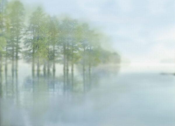 Fototapety Foggy Forest Dream tapeta las | fototapeta do łazienki