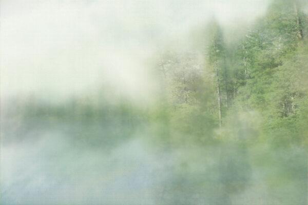 Fototapety Foggy Forest Cyan   tapeta las we mgle