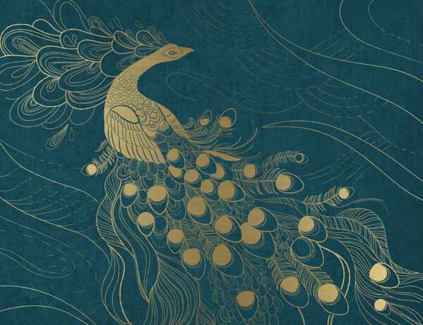 Fototapety Zwierzęta Peafowl niebieskie tło | tapety 3d