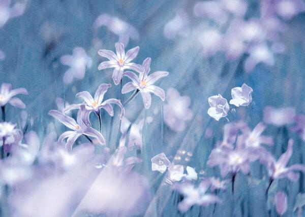Fototapety Fiori niebieskie odcienie   fototapeta w kwiaty