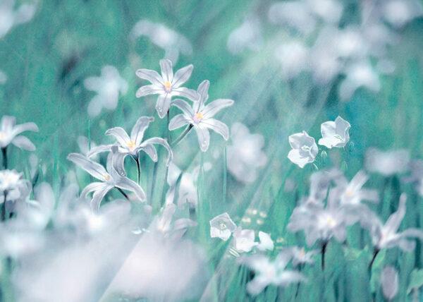 Fototapety Fiori zielone odcienie   fototapeta w kwiaty