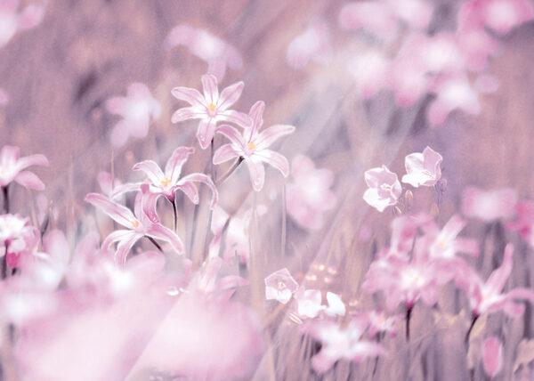 Fototapety Fiori różowe odcienie   fototapeta w kwiaty