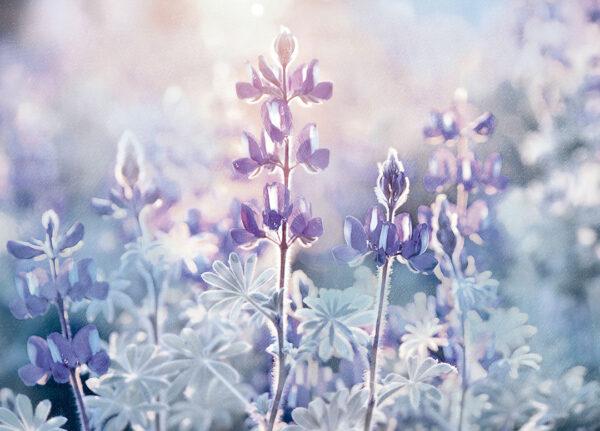 Fototapety Tau fioletowy odcień | fototapety kwiaty storczyk