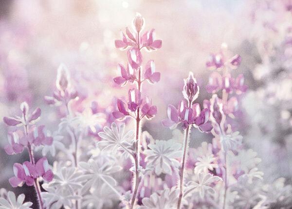 Fototapety Tau liliowy odcień | fototapety kwiaty storczyk