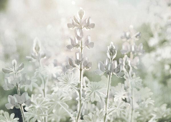Fototapety Tau zielone odcienie | fototapety kwiaty storczyk