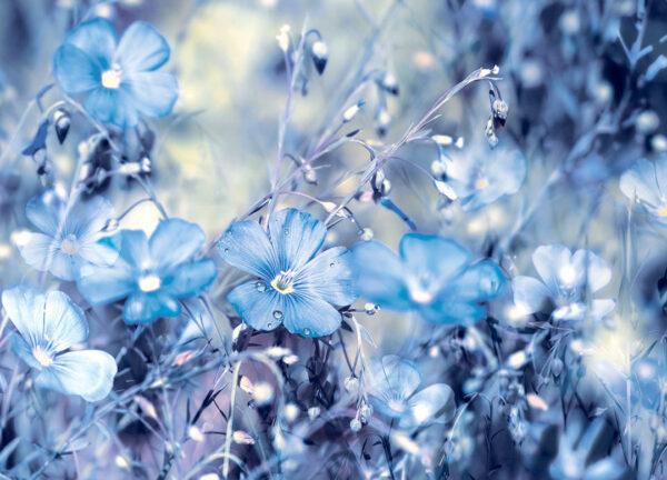 Fototapety Myosotis niebieskie odcienie | fototapety 3d kwiaty do sypialni