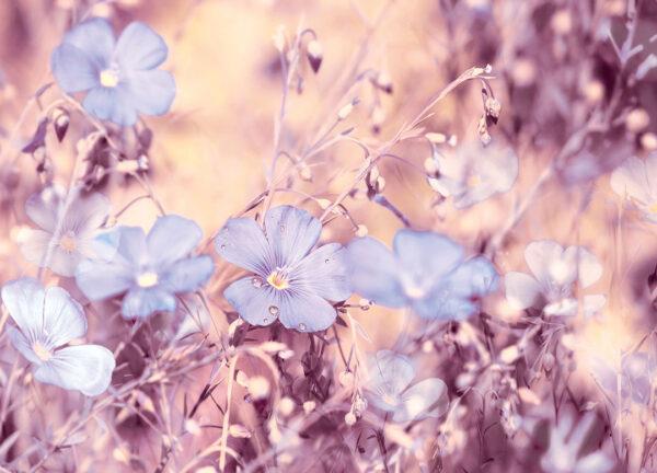 Fototapety Myosotis różowe odcienie | fototapety 3d kwiaty do sypialni
