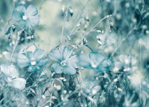 Fototapety Myosotis zielone odcienie | fototapety 3d kwiaty do sypialni