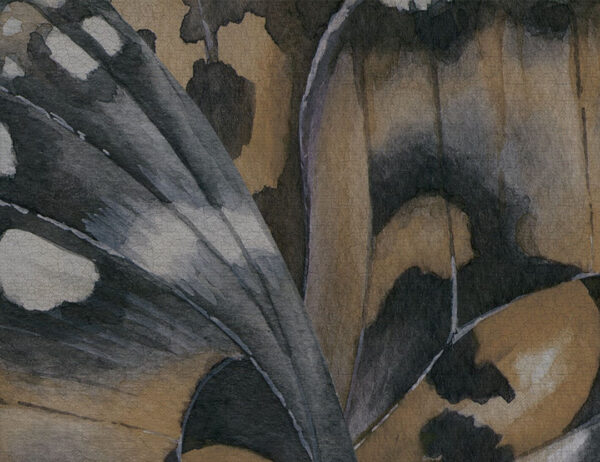 Fototapety Farfalla ciemnożółty odcień   tapety 3d do salonu
