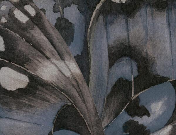 Fototapety Farfalla niebieskie odcienie   tapety 3d do salonu