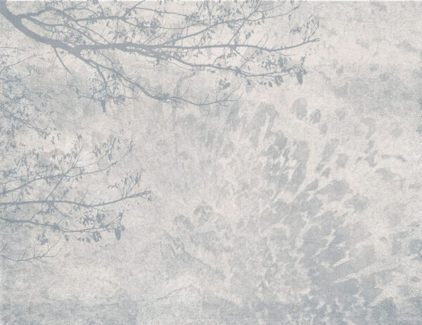 Fototapeta Cień Drzewa szare odcienie | tapeta las