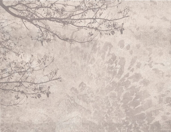 Fototapeta Cień Drzewa brązowe odcienie | tapeta las