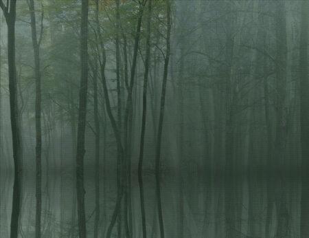 Fototapety Toftir zielone odcienie | fototapeta las we mgle