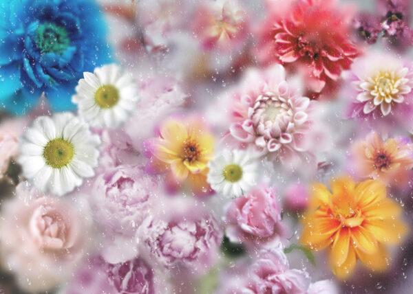 Fototapety La rosée   fototapeta kwiaty