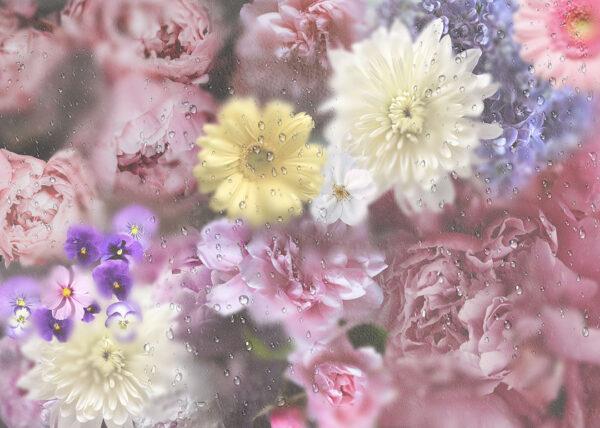 Fototapety La rosée szare odcienie   fototapeta kwiaty