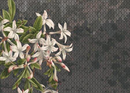 Fototapety Milieu szare odcienie | fototapeta kwiaty