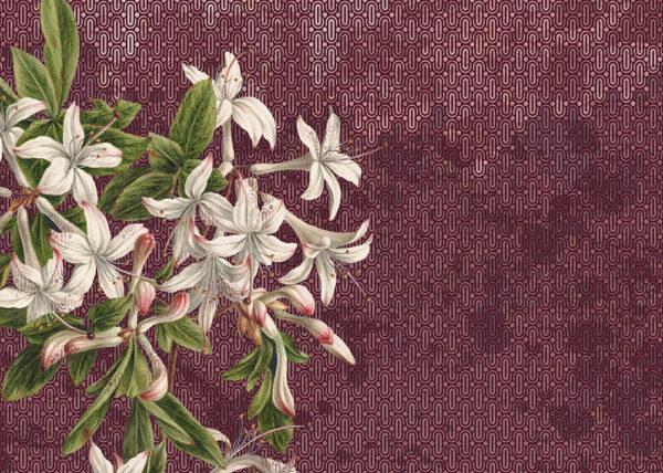 Fototapety Milieu fioletowe odcienie | fototapeta kwiaty