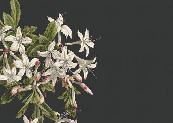 Fototapety Milieu Szare tło | fototapeta kwiaty