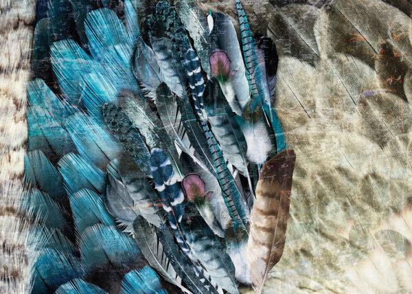 Fototapety Plumes niebieskie pióra | nowoczesne fototapety