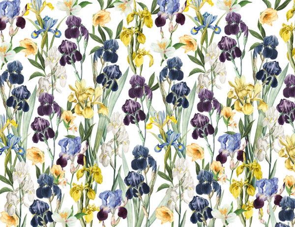 Fototapety Irises żółte odcienie | fototapeta kwiaty