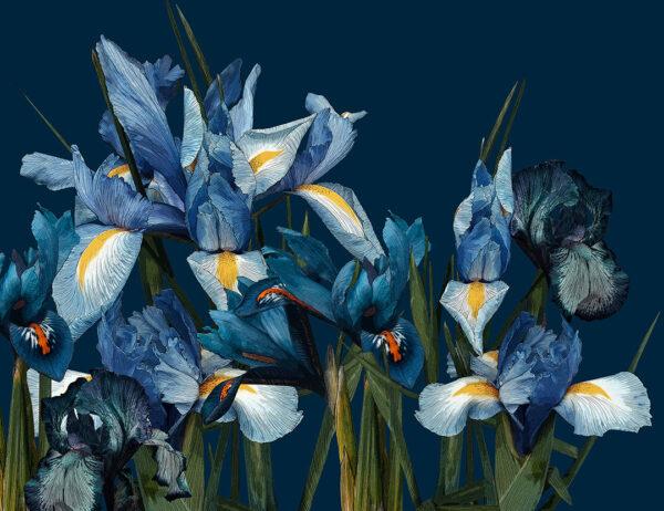 Fototapeta Iris Iridaceae na niebieskim tle   fototapety kwiaty